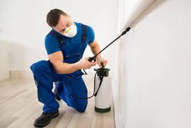 افضل طرق مكافحة الحشرات في المنزل