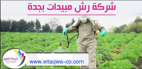 شركة رش مبيدات بجدة